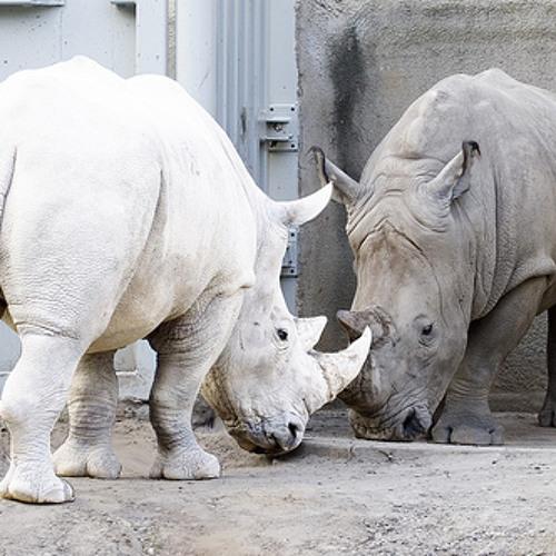 Virion - Albino Rhino - FREE D/L -