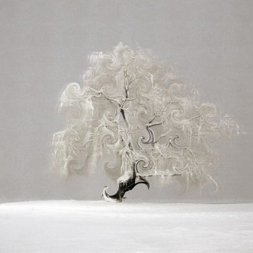 Tree Dancer