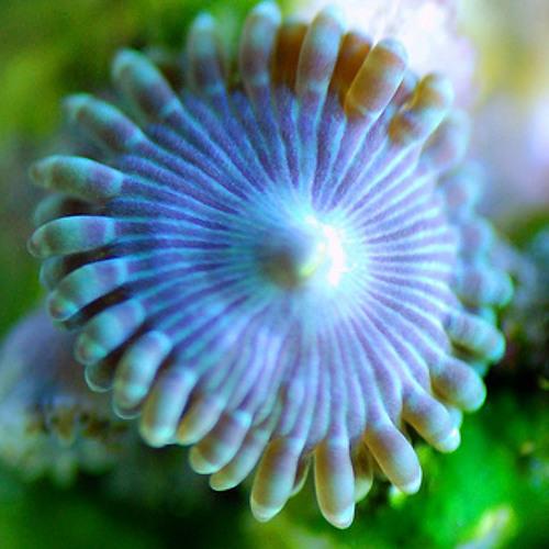 Liquid Vibes - Circling around Anemones and Corals
