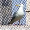 Salon Lounge - Seagull n Ant