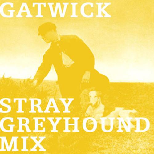 Gatwick Stray Greyhound Mix