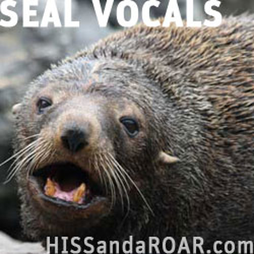 SEAL VOCALS LITE PREVIEW