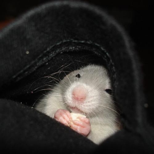 HamsterTAPE