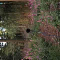 Haldon Forest Dawn