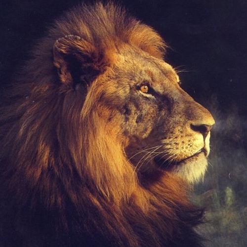 Daze One - The Lion's Paw