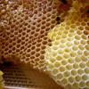 Maurice (BLKSQR) - Honey (PREVIEW)
