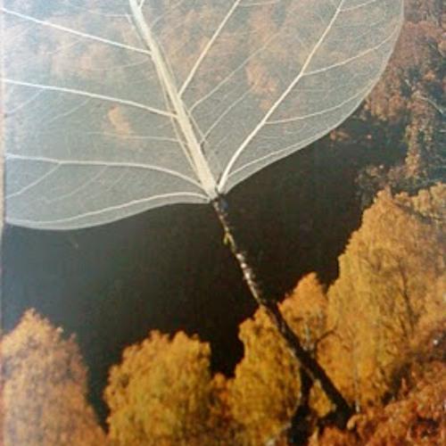 Plodocus-Skeleton Leaf