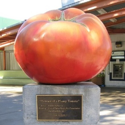 The Little Tomato: A theme song for Davis California