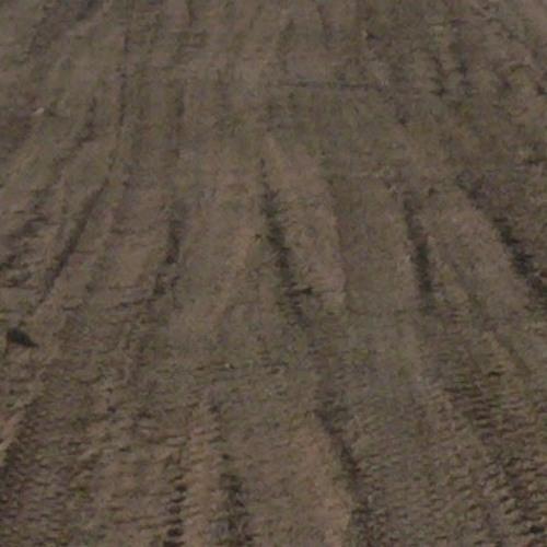 Dusty Land