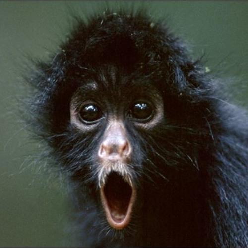 Monkey (childs play)
