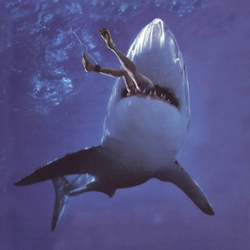 Shark Attack  VIP(sample)
