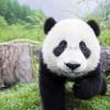 Be Nice To Pandas!