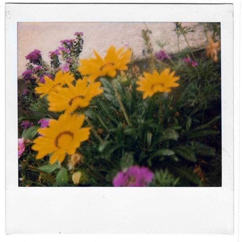 dreamflower ('09)