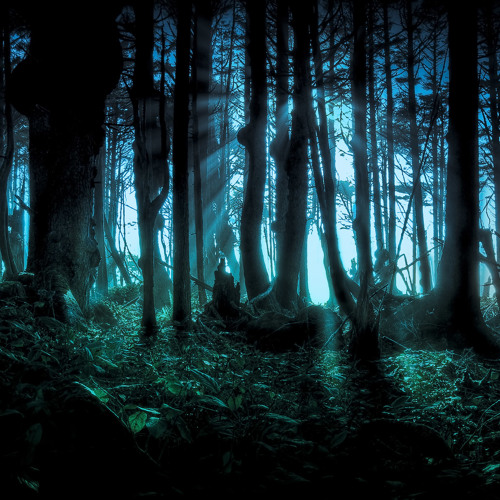 The Orbiting Forest