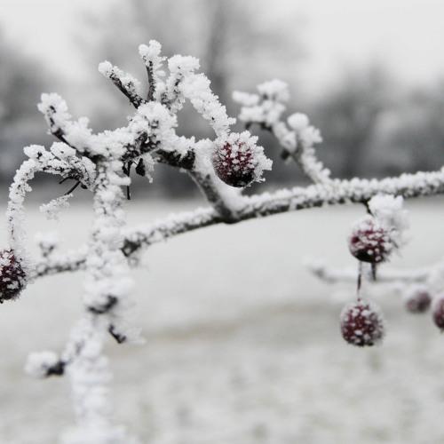 Winter ( a little demo)