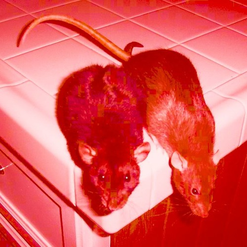 Godflesh Tribute by Shallow Grave Satanic Symphony Like Rats Mp3
