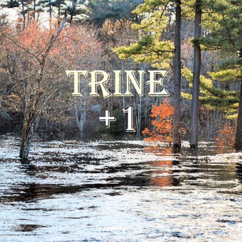 "Trine CD Compilation: Trine:  +1 and Trine: ""Politics"""