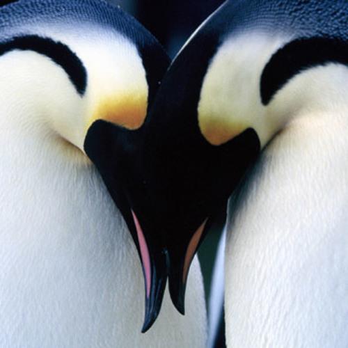 PREVIEW Avicii - Penguin (Original Mix)