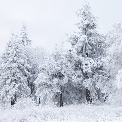 E Ultima Venne la Neve