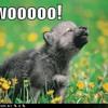 Werewolves of London - Warren Zevon (Daheen Rmx)