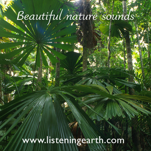 Rainforest sounds near Mission Beach, Queensland