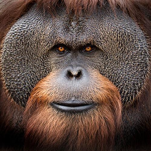 Westbam - Monkey Say Monkey Do (DJ Mellow Mo Bass Remix)