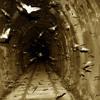 Bats - Nocturnal Frequencies Vol. 1