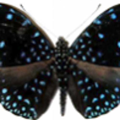 Larsp   -The butterfly distress  2011  UNSIGNED
