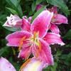 "Wade  Symphony No. 10, IV ""Consider the Lillies..."" (KJV)"