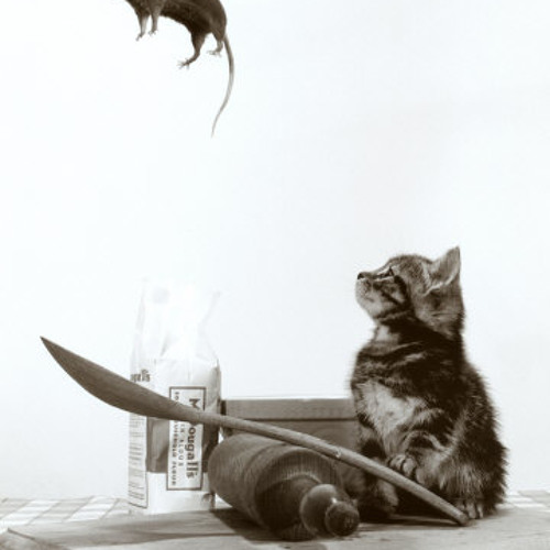 Blaze Kik - Cat and Mouse - FREE DOWNLOAD