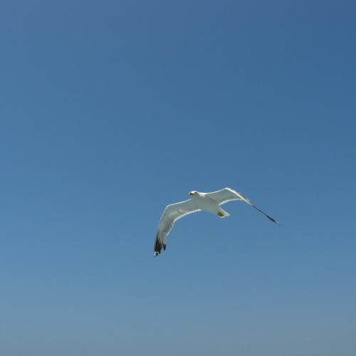 Little bird is flying