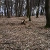 Early spring in the forest at Dobrovat
