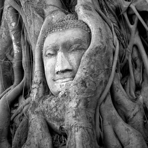 Root Virtue