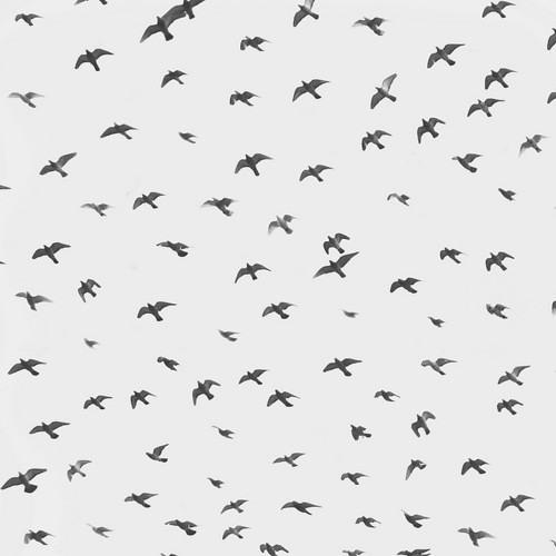 robert v | part 1 : (the birds) [PREVIEW]