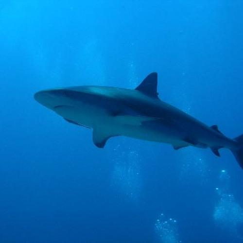 Shark Math
