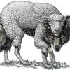 The Wolf in a Sheepskin Coat