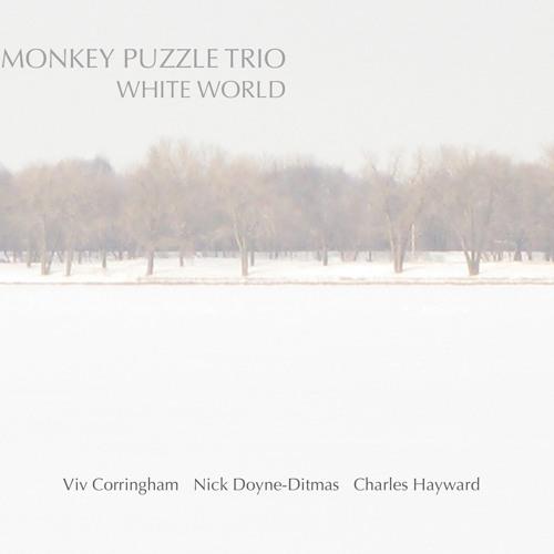 Monkey Puzzle Trio - Araucaria Araucana