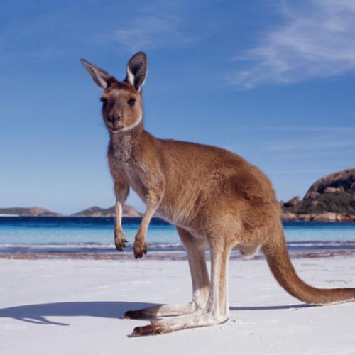 Australian Glitch Hop