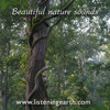 Kotagar forest ambience, Orissa, India