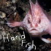Download Adele - Rolling In The Deep (Handfish remix).mp3 Mp3