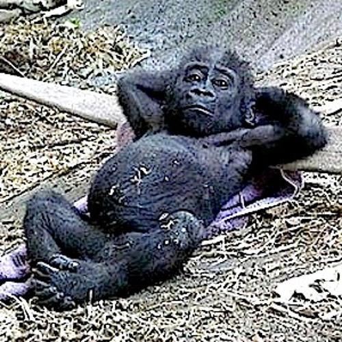 Every Monkey Wants A Beautiful Life