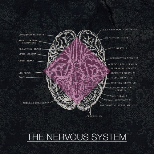 The Nervous System - JamBon