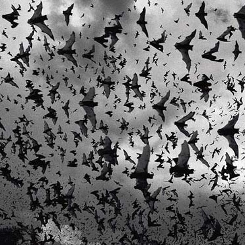 Bats - Fly By Knight