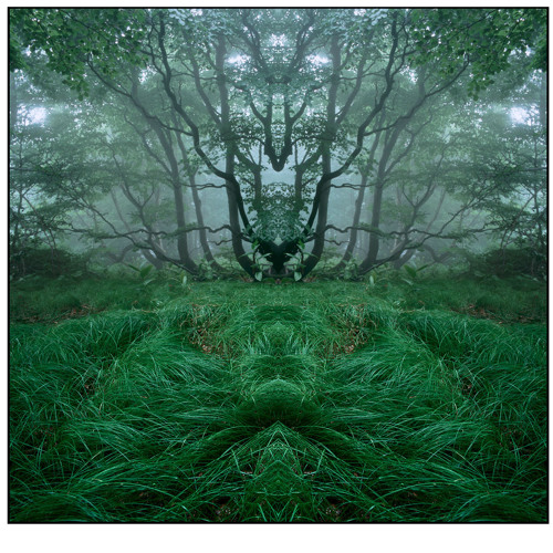 Mehequcixa - Oak Trees