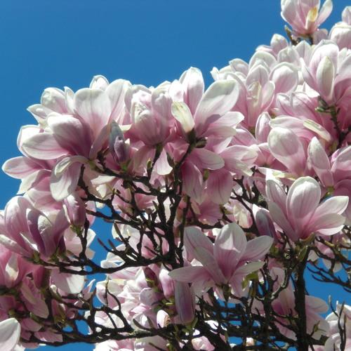 redraven - spring breaks