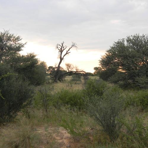 Kalahari desert midnight