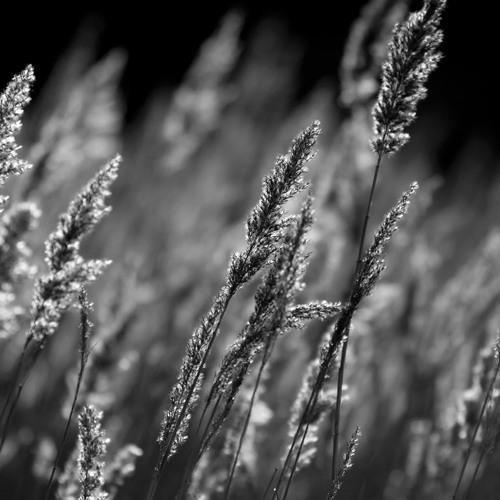 In the Shadows of the Reeds