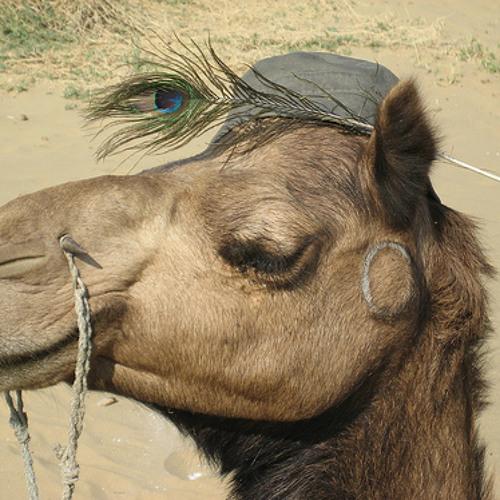 The Camels Eyelids
