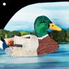 Ducks Don't Need Satellites