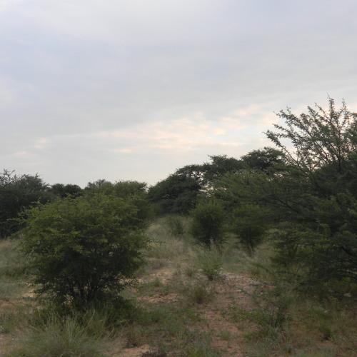 20110320T05-Kalahari-Dawn Chorus